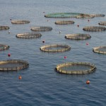 aquaculture cages greece