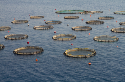 Fishing and Public Interest Groups Sue Feds Re: Offshore Aquaculture