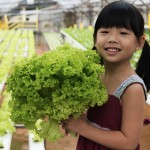 child w hydro lettuce crop shutterstock_140251054