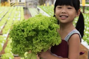 child w hydro lettuce crop shutterstock_140251054